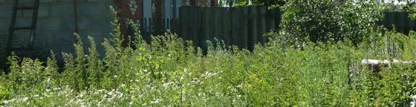 Покосить и убрать бурьян на участке в Минске