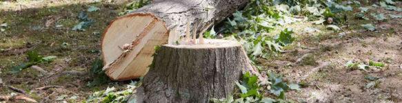 Спилить дерево на участке Минск и область