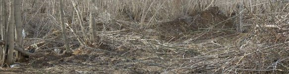Вырубить кусты и кустарник в Минске и области